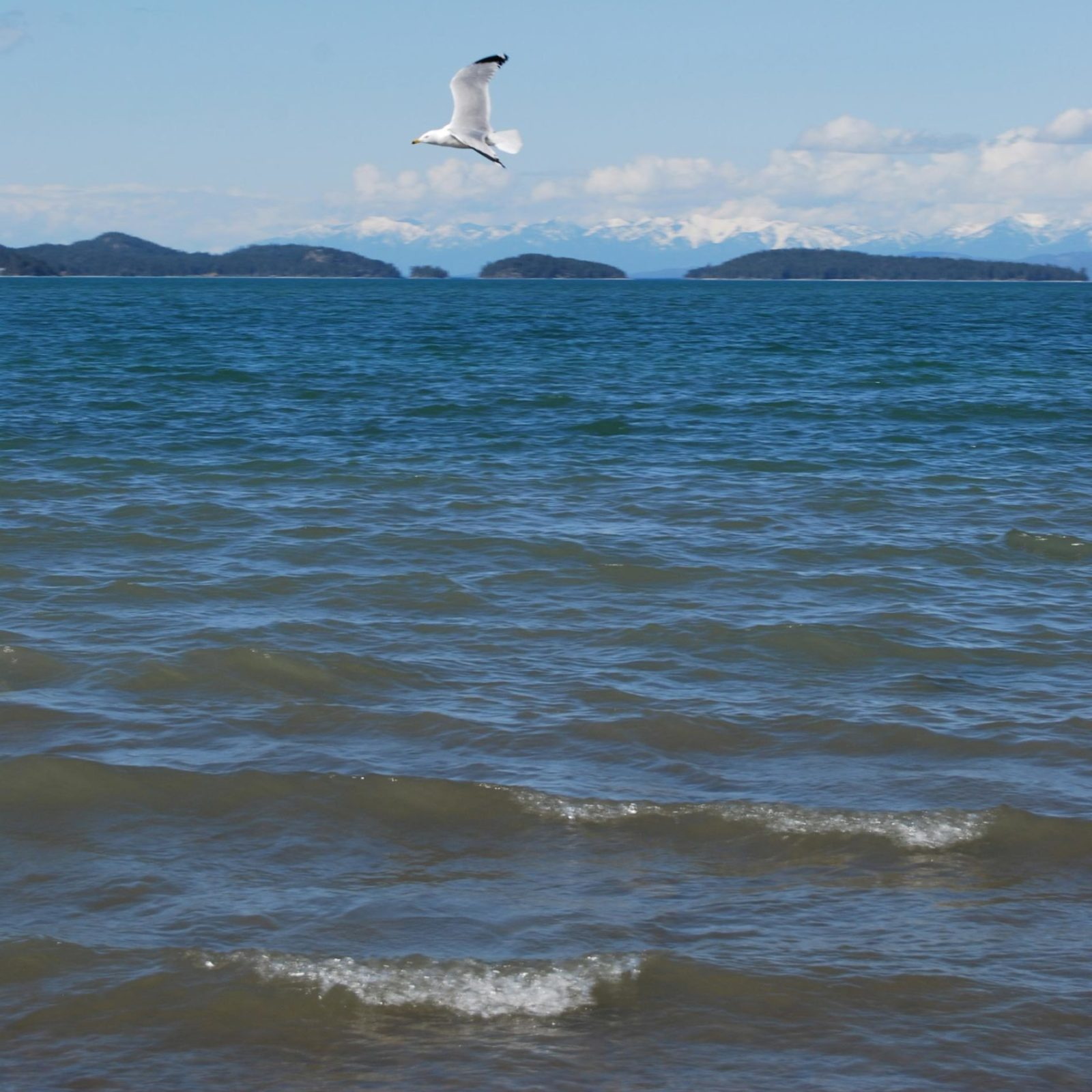 Montana Healthy Water